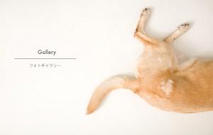 wannyan_gallery
