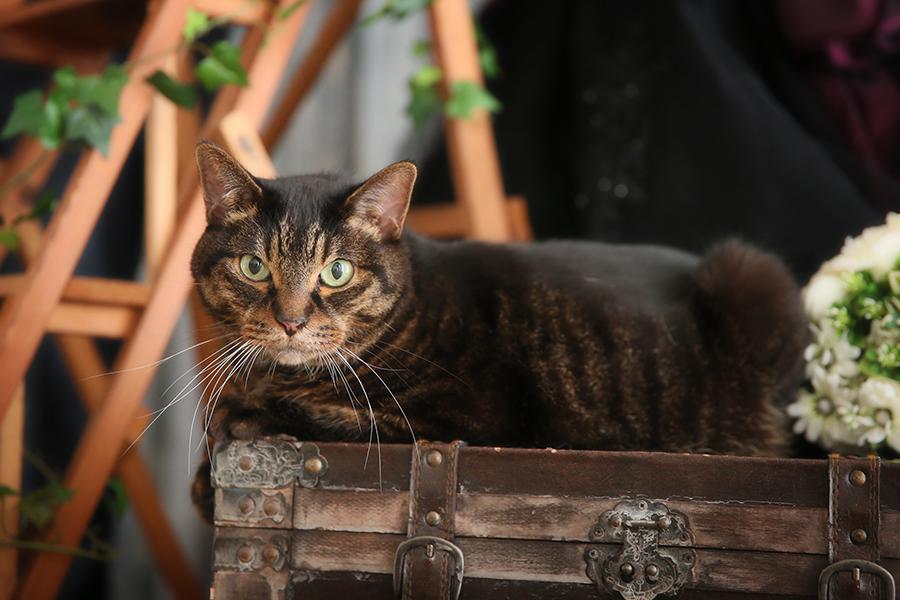 ウェディングフォト ペット 猫