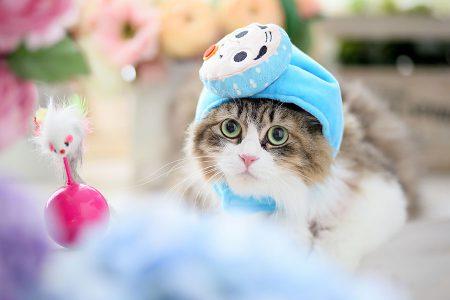 ペット写真 猫