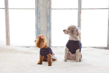 犬2匹 横向き