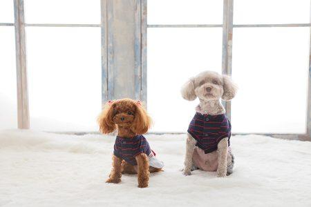 犬2匹 窓 正面
